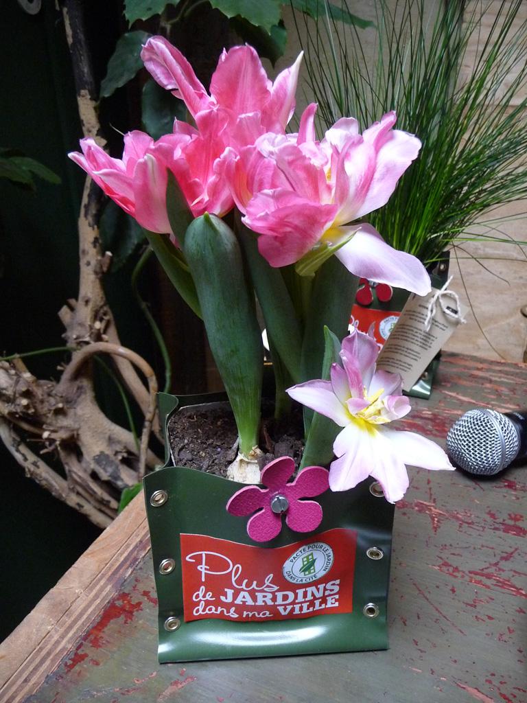 Tulipes forcées dans un Potogreen, lancement du pacte Plus de jardins dans la cité, Le Comptoir Général, quai de Jemmapes, Paris 10e (75), 1er mars 2012, photo Alain Delavie