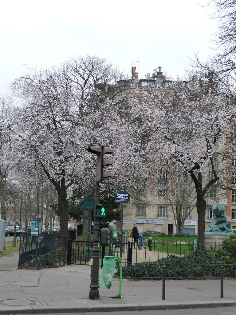 Cerisiers à fleurs dans le square Cambronne en fin d'hiver, Paris 15e (75)
