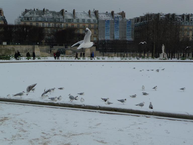 Oiseaux sur le bassin gelé et enneigé du Jardin des Tuileries, Paris 1er (75)