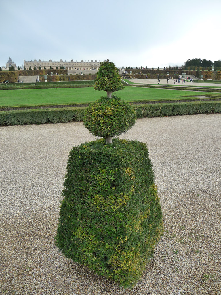 Topiaire d'if dans les jardins du Domaine de Versailles (Yvelines) en automne