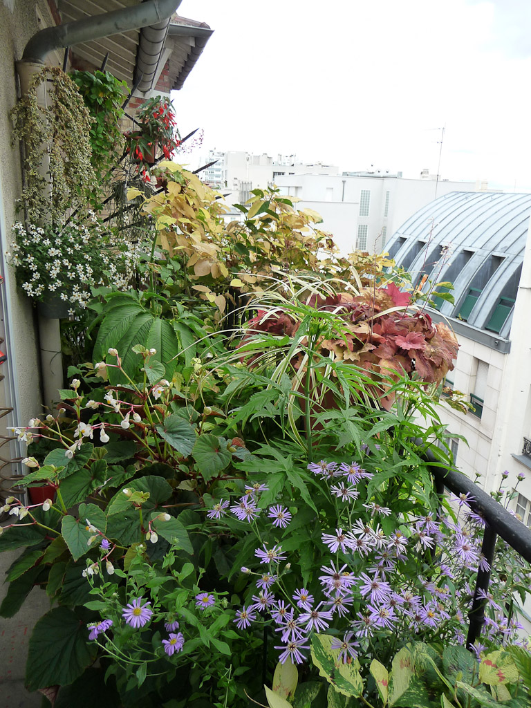 Mon balcon en été, Paris 19e (75)