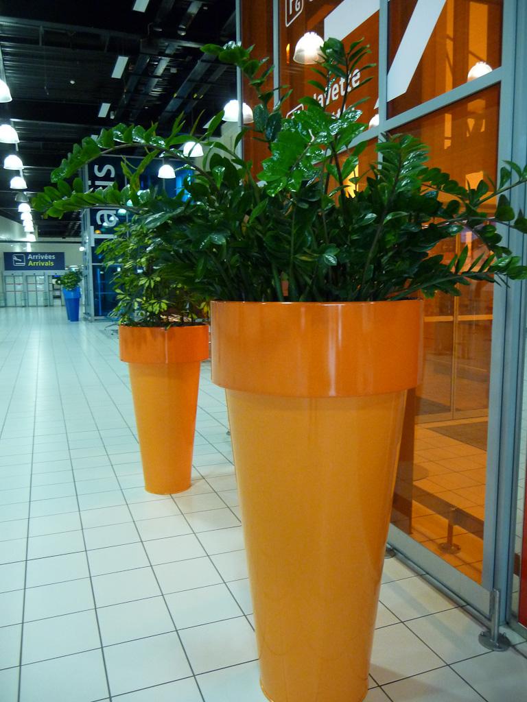 Grandes potées de plante d'intérieur (Zamioculcas et Schefflera) dans le terminal 2G de l'Aéroport de Paris Charles de Gaulle