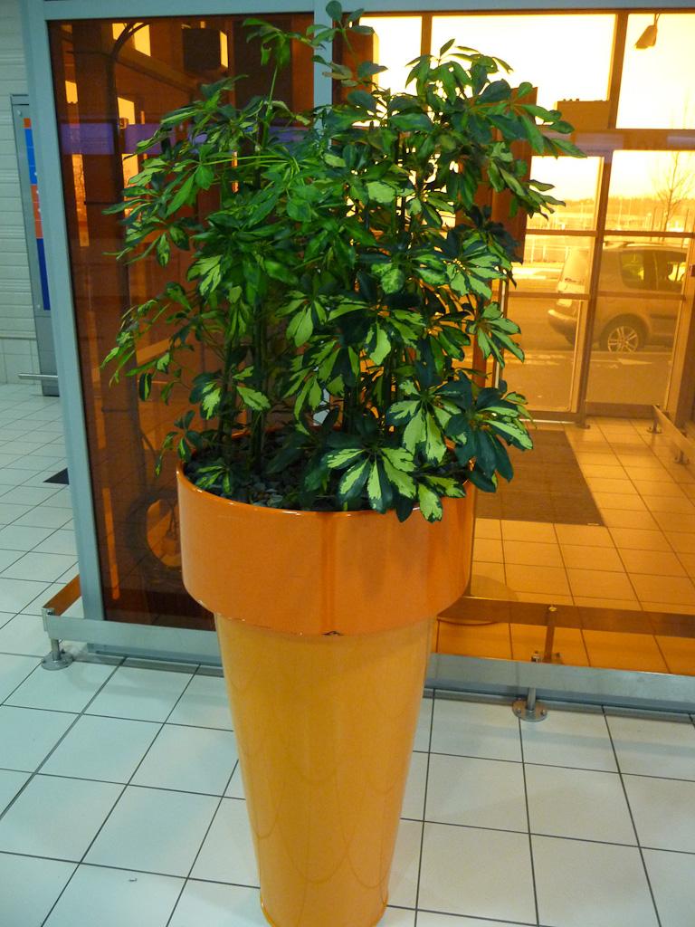 Grande potée de plante d'intérieur (Schefflera) dans le terminal 2G de l'Aéroport de Paris Charles de Gaulle