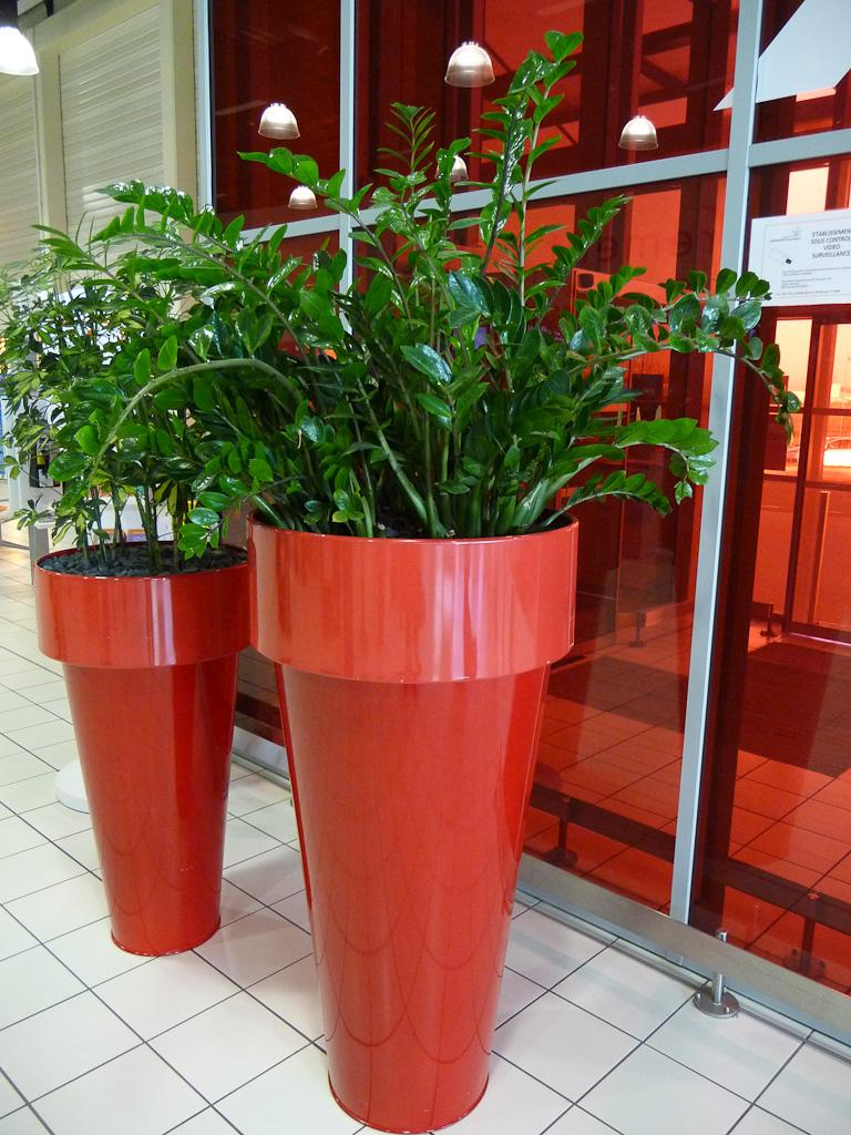 Grandes potées de plantes d'intérieur (Zamioculcas, Schefflera) dans le terminal 2G de l'Aéroport de Paris Charles de Gaulle