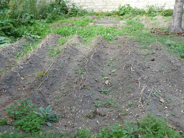 Parcelle des pommes de terre du Jardin pour les autres, Fondation Eugène Napoléon, Paris 12e (75)