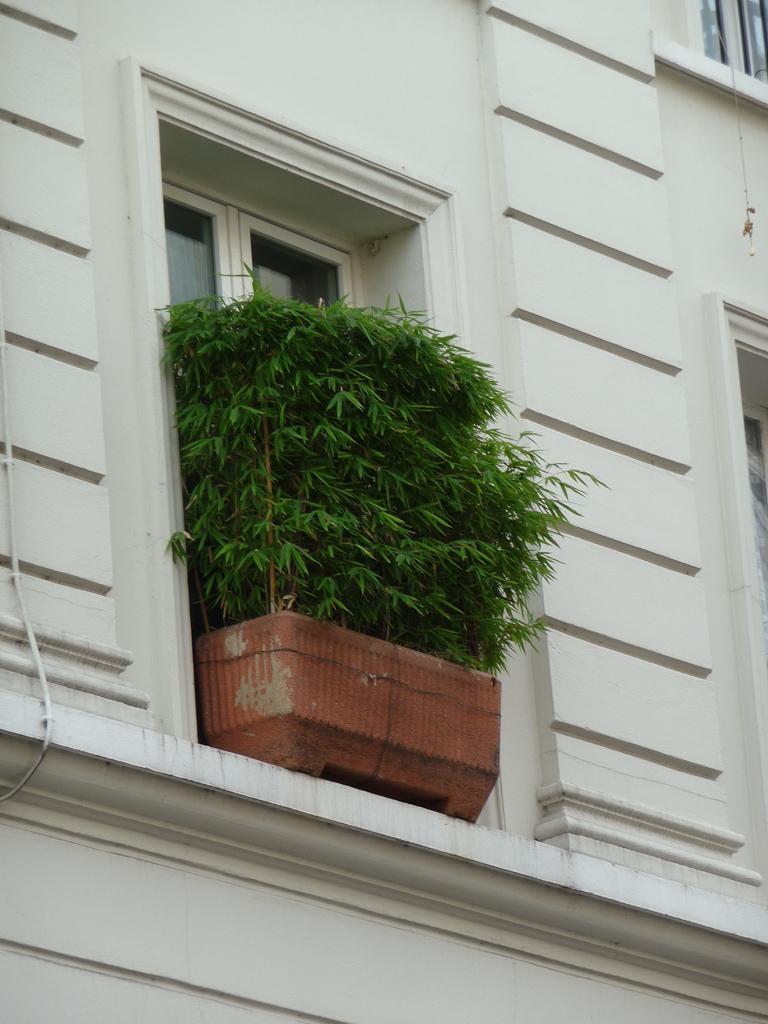 Jardinière de bambou sur un rebord de fenêtre, rue de la Fontaine-au-roi, Paris 10e (75)