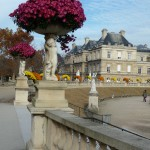Vasques de chrysanthèmes dans le Jardin du Luxembourg en automne, Paris 6e (75)