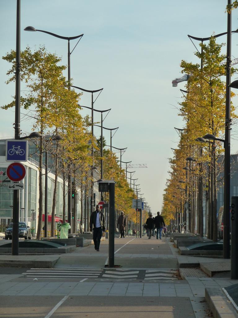 Doubles rangées d'arbres aux quarante écus (Ginkgo biloba) en automne sur l'avenue de France, Paris 13e (75)