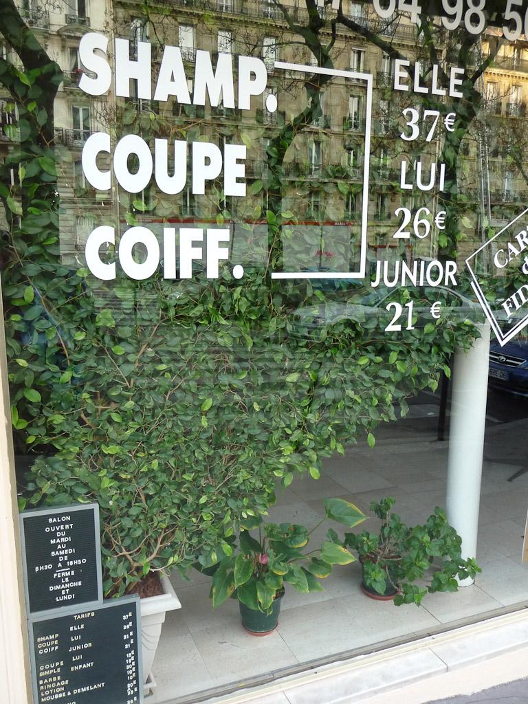 Ficus benjamina derrière la vitrine d'un coiffeur dans l'avenue Kleber (Paris 17e)