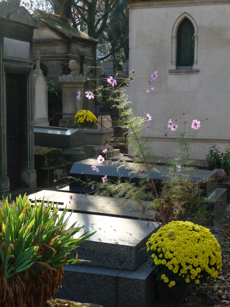 Cosmos et chrysanthèmes dans le cimetière de Montmartre en automne par une belle journée ensoleillée, Paris 18e (75)