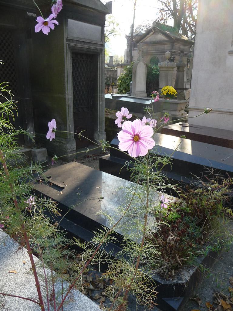 Cosmos dans le cimetière de Montmartre en automne par une belle journée ensoleillée, Paris 18e (75)