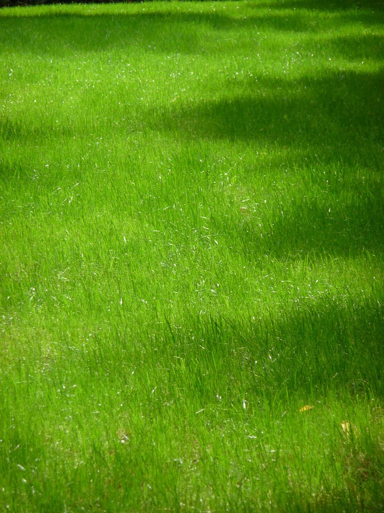 Jeune pelouse dans le square René Le Gall, Paris 13e (75)