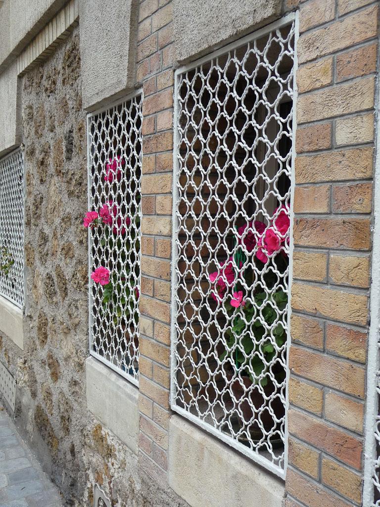 Géraniums zonales (Pelargonium) derrière une grille dans la rue Gustave Geffroy, Paris 13e (75)