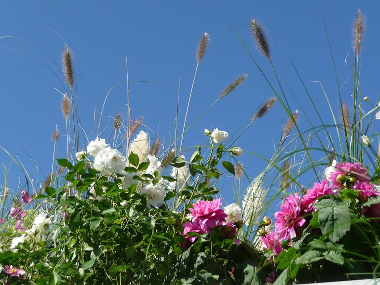 Sur le toit du jardin Truffaut, stand 139, Journées des plantes de Courson automne 2011, Essonne
