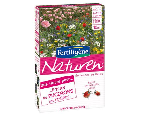 Des fleurs pour limiter les pucerons des rosiers