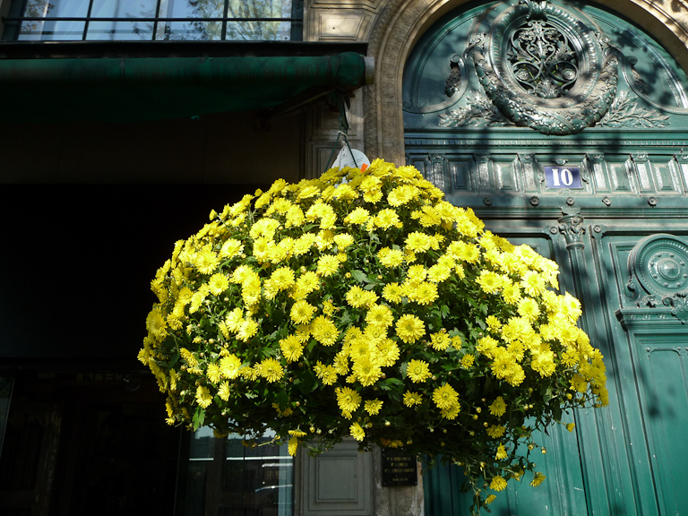 Suspension de chrysanthèmes à petites fleurs, quai de la Mégisserie, Paris 1er (75)
