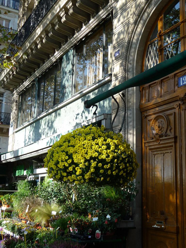 Suspension de chrysanthèmes à petites fleurs, quai de la Mégisserie, Paris 1er (75), octobre 2011, photo Alain Delavie