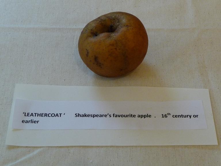 """Pomme 'Leather Coat', exposition """"L'origine de la pomme"""""""