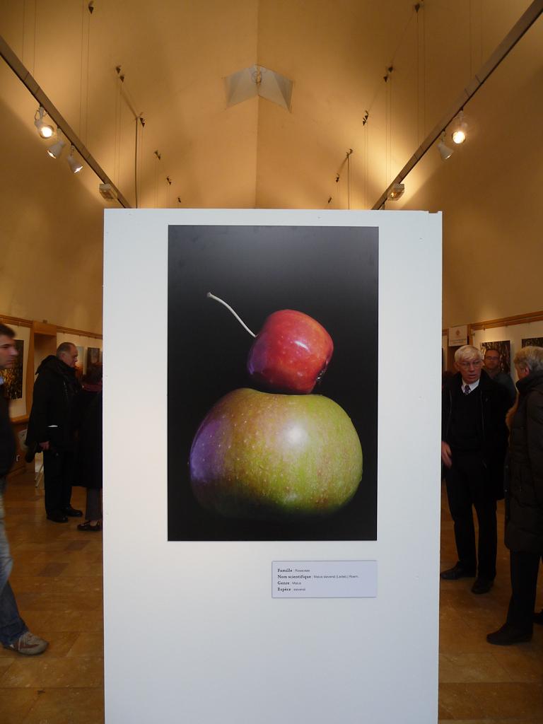 Photo de pommes du Malus sieversii, exposition L'origine de la pomme