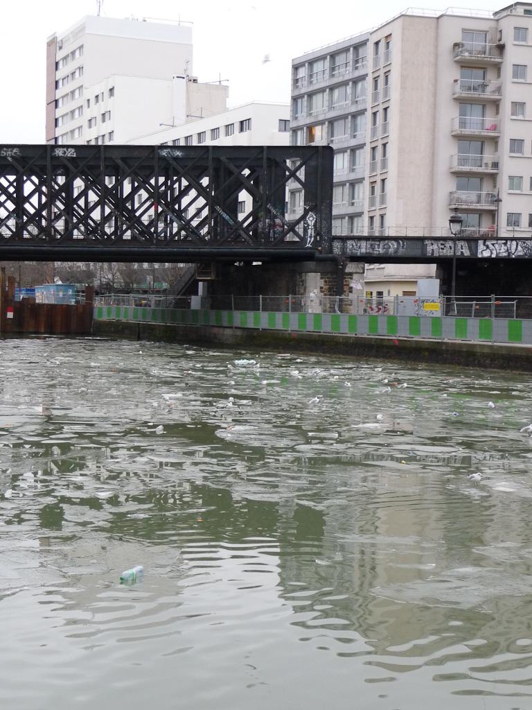 Mouettes dérivant sur les plaques de glace à  la surface du canal de l'Ourcq, Paris 19e (75)