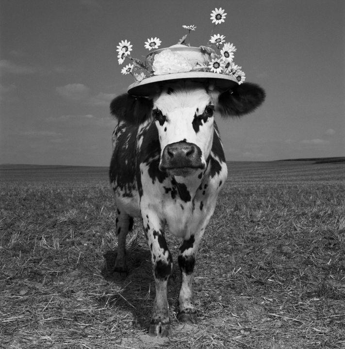 Exposition Oh, la vache ! Photographie Jean-Baptiste Mondino