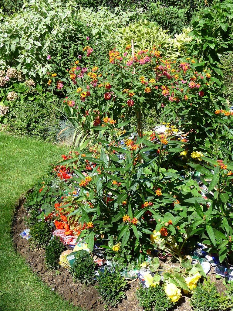 Paillis de canettes dans les massifs de fleurs d'été du jardin des Couronnes, Paris 20e (75)