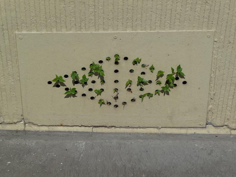 Mauvaises herbes sortant d'une plaque fermant une ouverture de cave, Paris 20e (75)