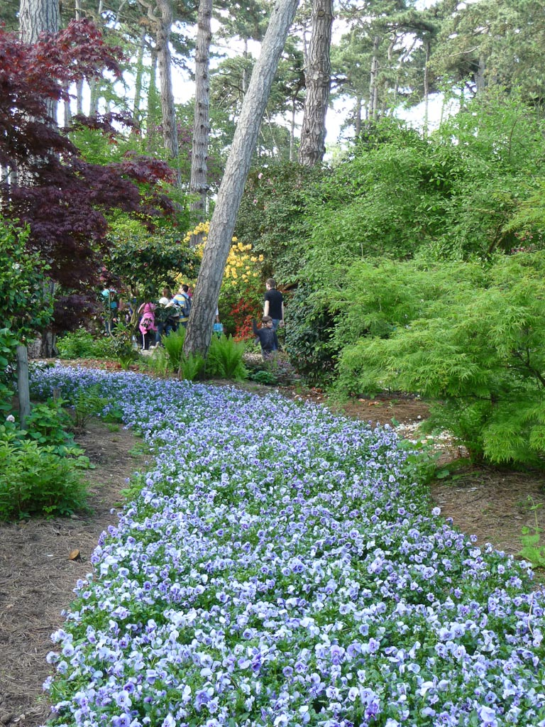 Tapis de pensées bleues dans le Parc Floral de Paris, Paris 12e (75)