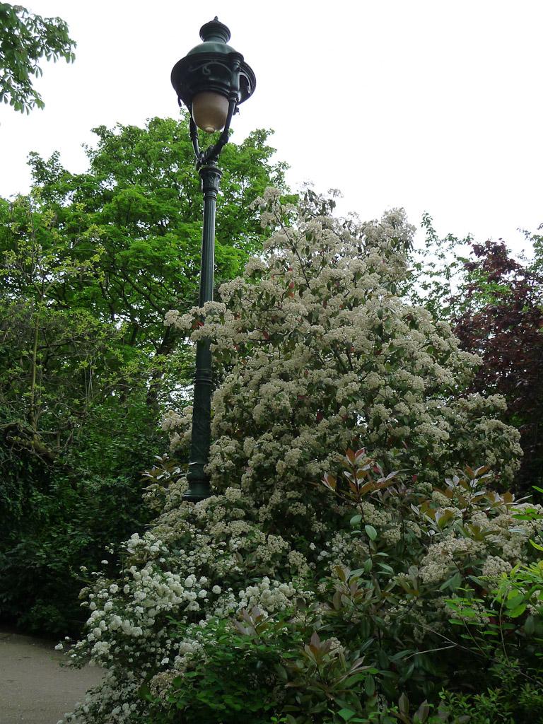Lampadaire entouré d'arbustes fleuris au printemps dans le parc des Buttes-Chaumont, Paris 19e (75)