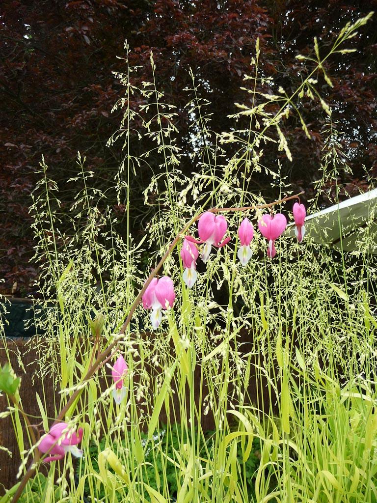 Dicentra spectabilis et Millium effusum 'Aureum', Pépinière Le Jardin du Morvan, Thierry Denis, Journées des Plantes de Courson, Printemps 2012, Domaine de Courson, Courson-Monteloup (Essonne)