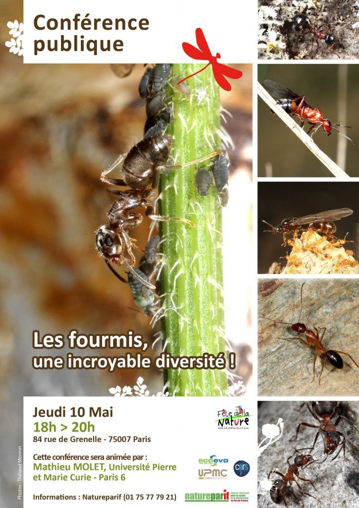 Conférence publique : Les fourmis, une incroyable diversité !