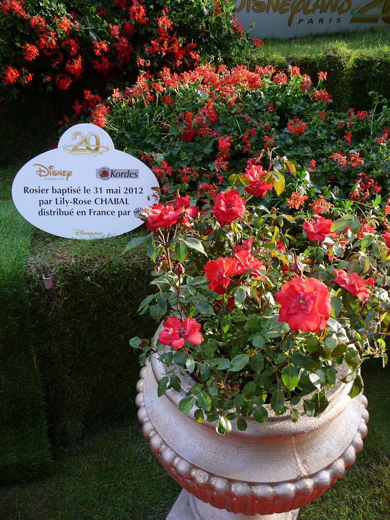 Rose Princesse Disney dans le jardin enchanté de Disneyland Paris, Jardins Jardin 2012, Jardin des Tuileries, Paris 1er (75)