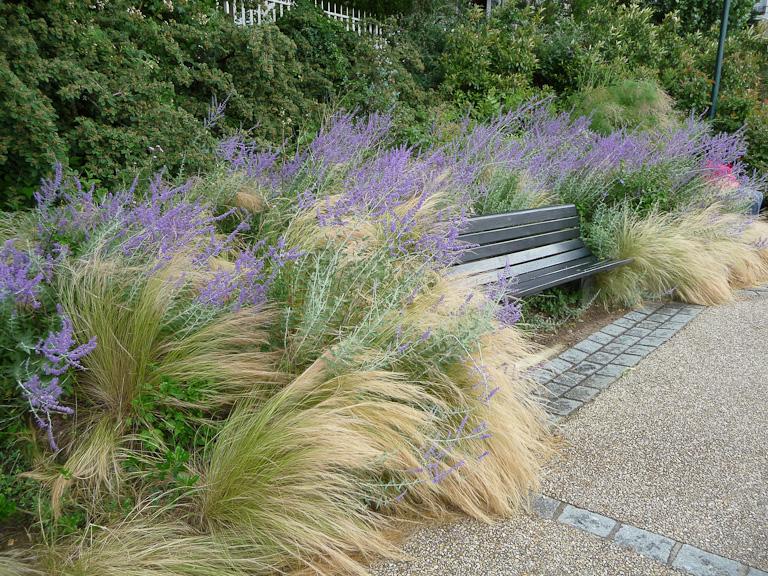 Massifs de stipes cheveux d'ange (Stipa tenuifolia) et de pérovskias autour d'un banc dans le parc de Belleville, Paris 19e (75)