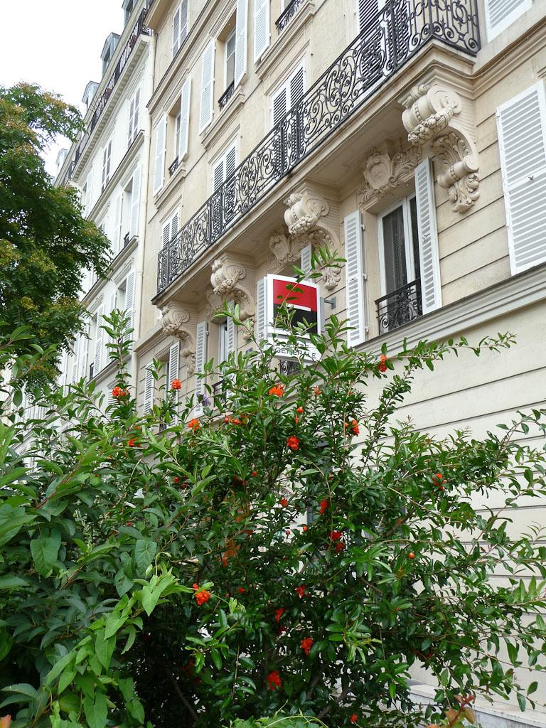 Grenadier à fleurs doubles dans le boulevard Voltaire, Paris 11e (75)