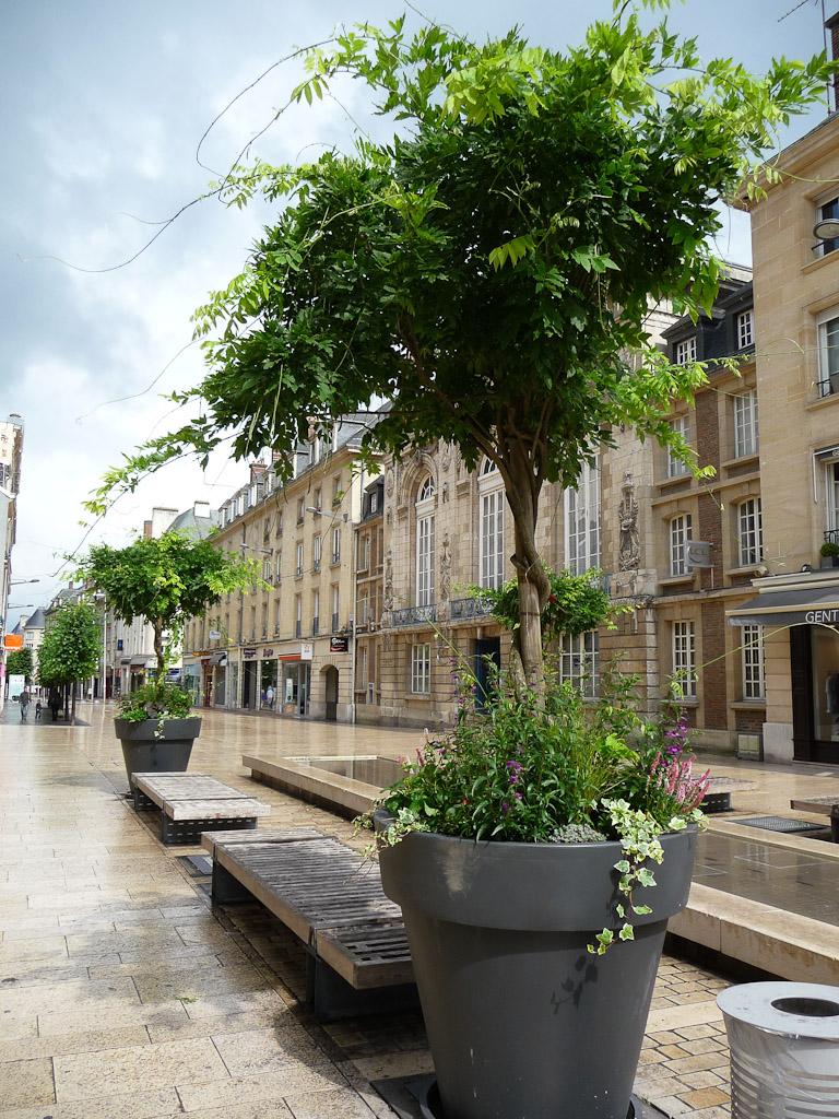 Glycine en arbre cultivée dans un gros pot dans le centre ville d'Amiens (Somme)