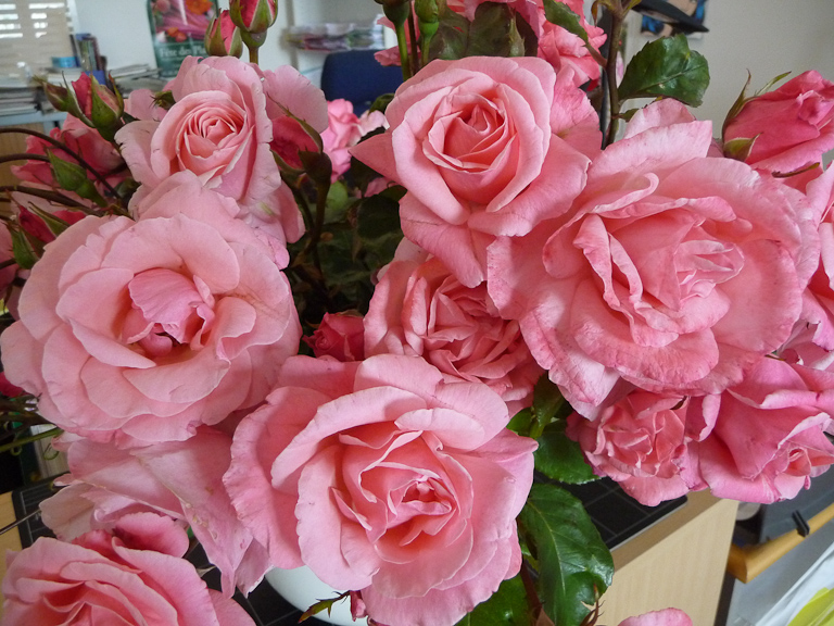 Bouquet de roses Queen Elisabeth, 20 juillet 2012, photo Alain Delavie