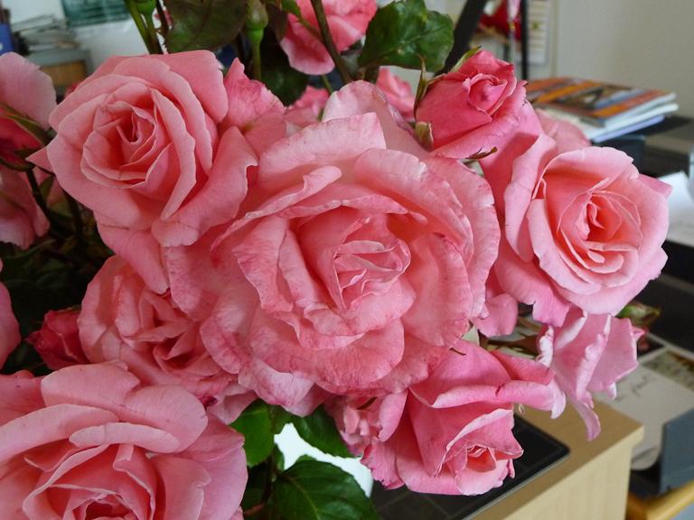 Bouquet de roses Queen Elisabeth