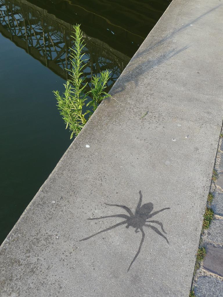 Graffiti (tag) en forme d'araignée sur la berge du canal de l'Ourcq, le long du quai de l'Oise, Paris 19e (75)