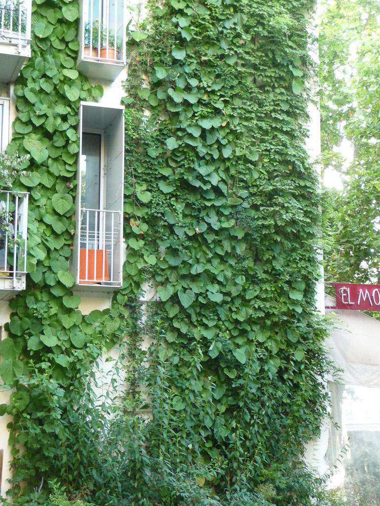 Mur v g tal version plantes grimpantes dans l avenue jean jaur s paris 19e paris c t jardin - Immeuble vegetal ...