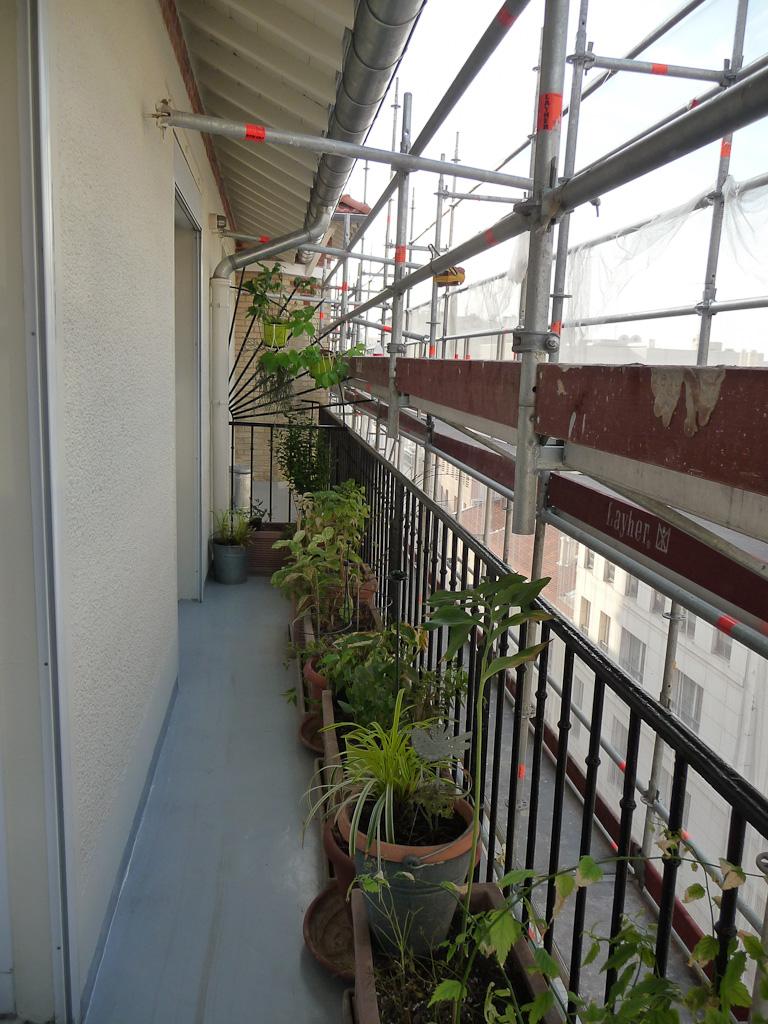Le retour complet de mes plantes de la salle à manger au balcon, Paris 19e (75)