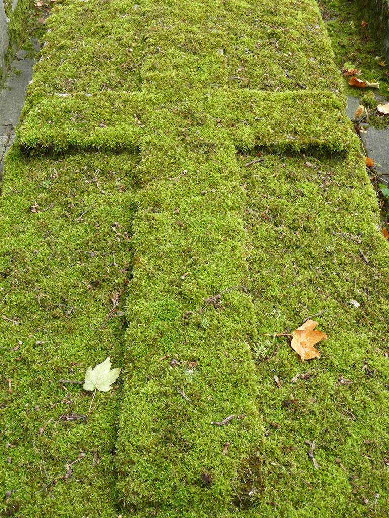 Tombe recouverte de mousse bien verte, cimetière du Père Lachaise en été