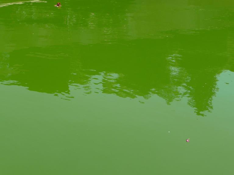 Eau verte dans un bassin