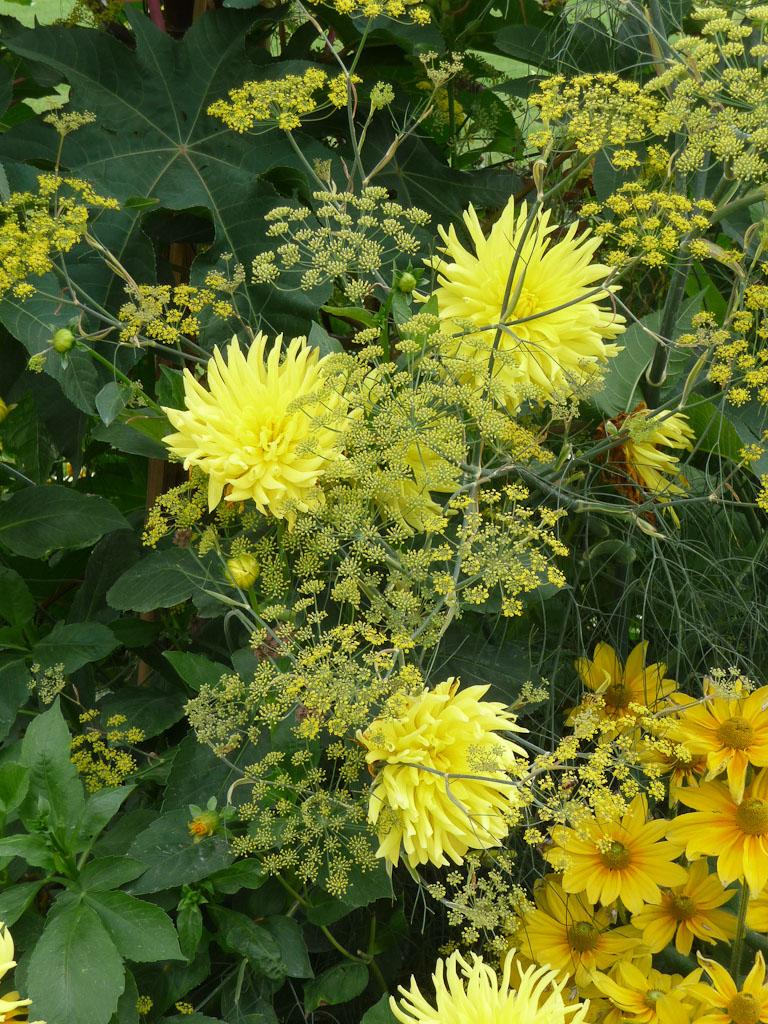 Dahlia cactus et fenouil, décorations florales estivales, jardin du Luxembourg, Paris 6e (75)