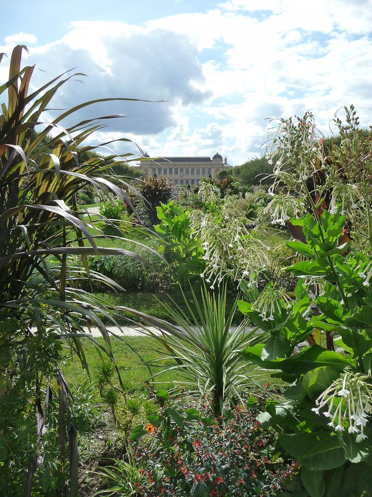Grands parterres du Jardin des Plantes (Muséum national d'Histoire Naturelle), Paris 5e (75)