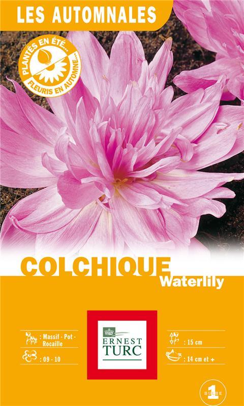 Colchique 'Waterlily', Ernest Turc