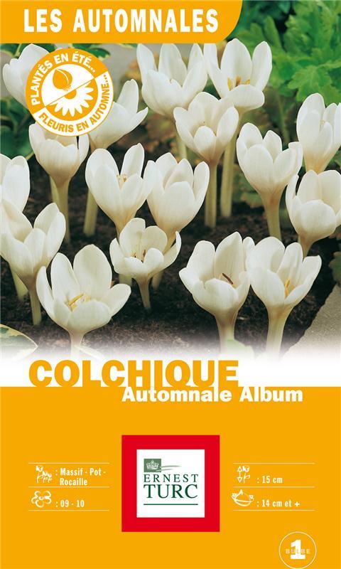 Colchique automnale 'Album', Ernest Turc