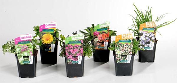 Plantes vivaces, collection botanic