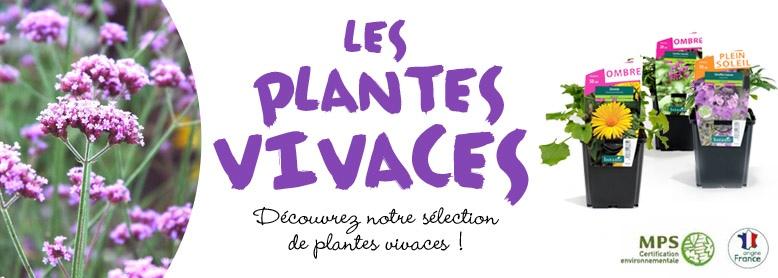 Home Les plantes vivaces, site botanic