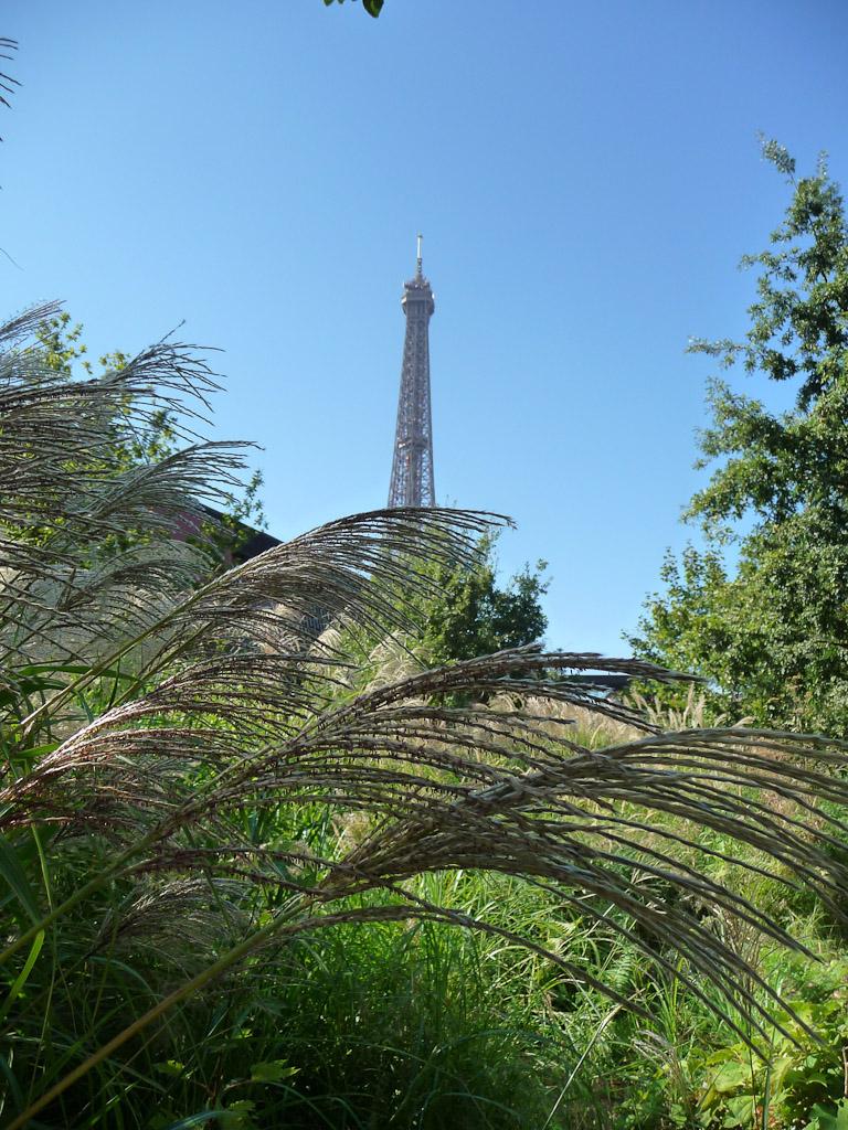 Tour Eiffel vue depuis le jardin du Musée du Quai Branly, Paris 7e (75)