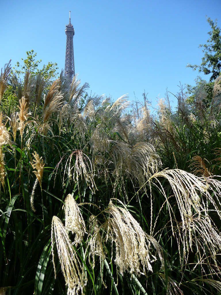 Tour Eiffel vue du jardin du Musée du Quai Branly, Paris 7e (75)